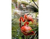 Flamingo 1 - nature photography