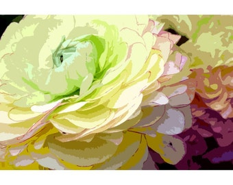 Ranunculus 1 - nature photography