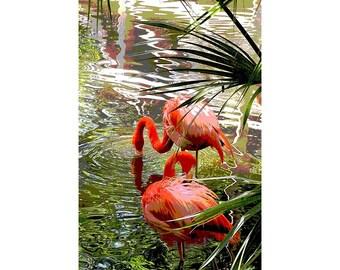 Flamingo 1 - nature photography