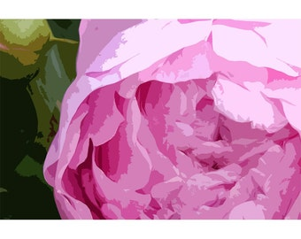 Peony 6 - nature photography