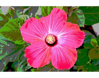Hibiscus 1 - nature photography