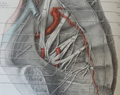 1947 An Atlas of Anatomy Medical Drawings Hundreds of Medical Drawings