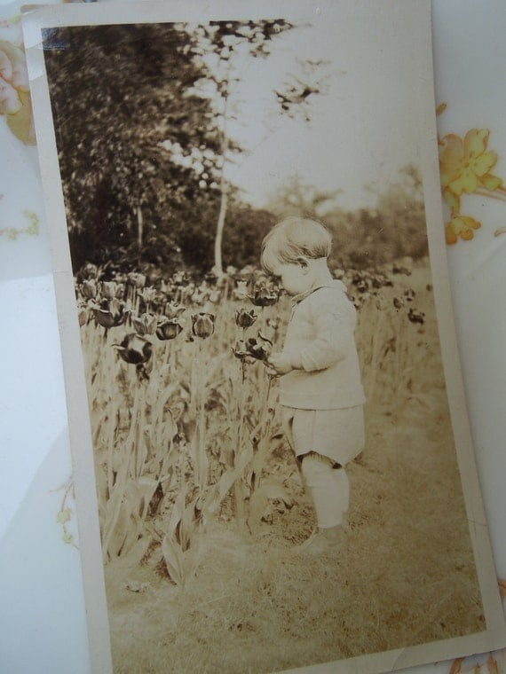 Vintage 1930's Photo of Little Boy With Tulips