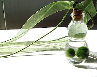 Mini Gourd Bottle Marimo Moss Ball Terrarium Necklace