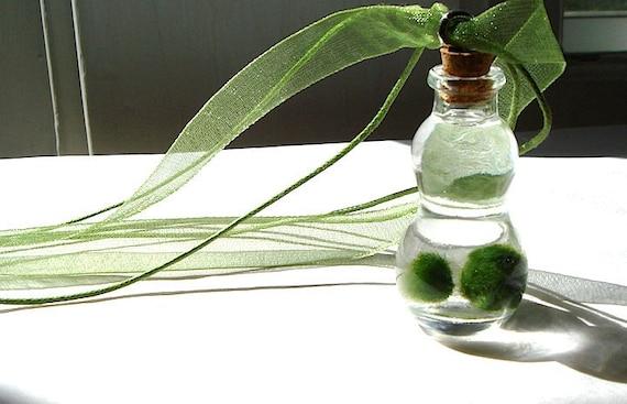Mini Gourd Bottle Marimo Moss Ball Terrarium Necklace
