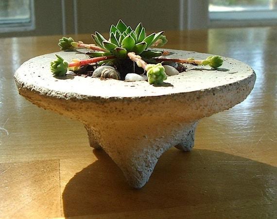 SALE ZEN Mini Concrete Pot Terrarium with Succulent Plant