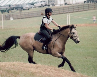 The Little Bucky that Could Buckskin Horse Jumps cross country