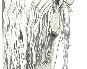 HORSE ART 8x10 Andalusian Stallion ROMANTIC Graphite