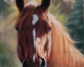 Autumn Light - Horse Print of original pastel painting drawing Equine art by Cindy Price