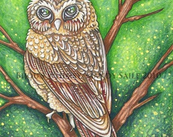 """Saw Whet Owl 1 - 8 x 10"""" ART PRINT of a Saw Whet Owl with soft brown feathers and a gentle look as he perches on a tree branch in the forest"""