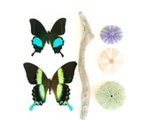 Bits & Pieces of Nature Print  Affordable Home Photography  Decor Nature Lover Ocean Theme Sea Theme Butterfly