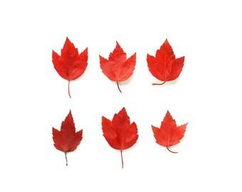 Autumn Leaves Art Print Affordable Home Photography Prints Nature Photography Decor Nature Lover Woodland Scene