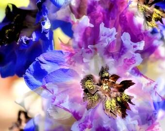 Flower Daydream
