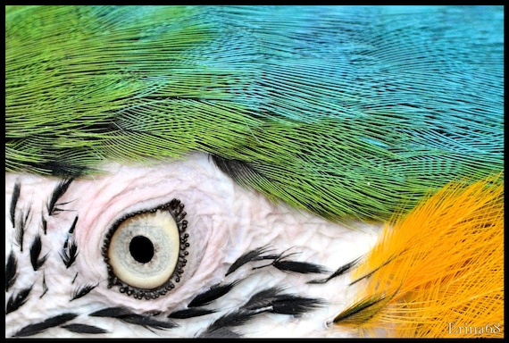 Parrot 8x12 Print