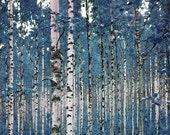 Birches in Blue