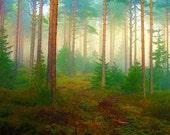 Nature, Landscape, Woodland, Forest, Photograph, Giclee Print, Springtime, Photomontage, Collage, Illustration