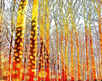 Fine Art Print, Giclee Archival Print, Photomontage, Collage, Painted Photographs, The Klimt Forest fine art giclee print