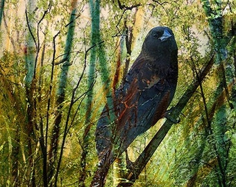 Giclee Archival Print, Photomontage, Collage, Painted Photographs, The Return of the Nightingale