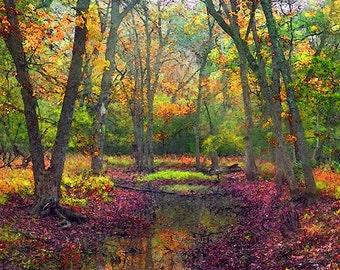 Autumn Landscape, Fall Landscape, Forest, Water, Pond, Trees, Landscape, Nature Photograph, Fine Art Painted Photograph, Giclee Print