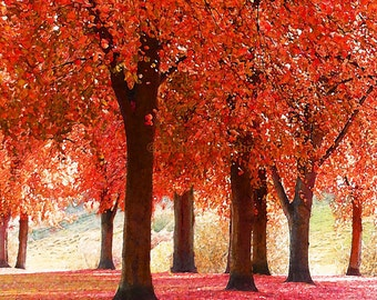8x10 archival Giclee print   Modern Art ...  Autumn Trees