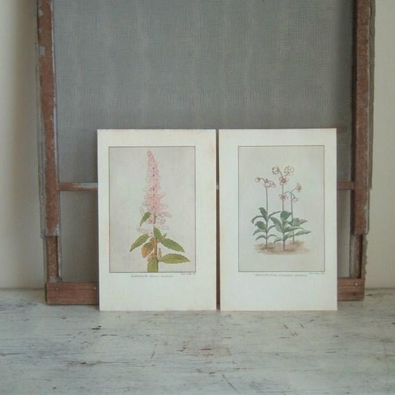 pair vintage floral prints 1917