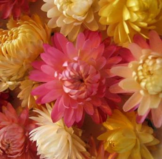 Dried flowers for POTPOURRI or CRAFTING 4 cups