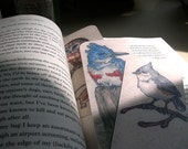 Titmouse, Owl, Kingfisher: Bookmark Bundle
