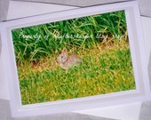 Photo Card Baby Rabbit Bunny