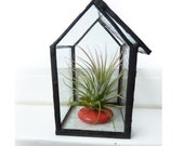 Miniature Glass Terrarium Greenhouse - Air Plant Holder- Tillandsia Ionantha
