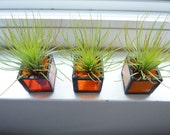Air plant Terrarium - stained glass box- Orange Ombre with Tillandsia Air Plant