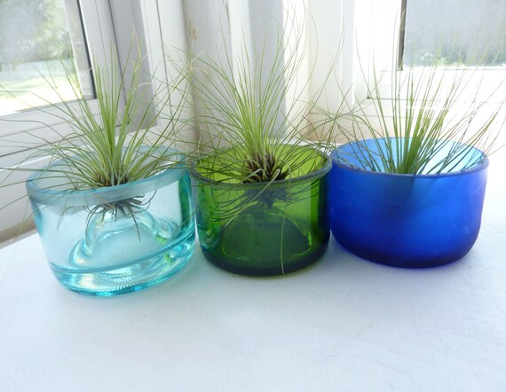 Recycled bottle bottom - air plant holder - set of three with plants
