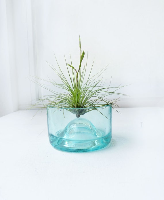 Reserved for Andrea- Recycled Upcycled bottle-  air plant holder - aqua with filifolia air plant