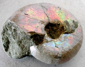 RESERVED FOR Pohlian- Opalized Ammonite Fossil