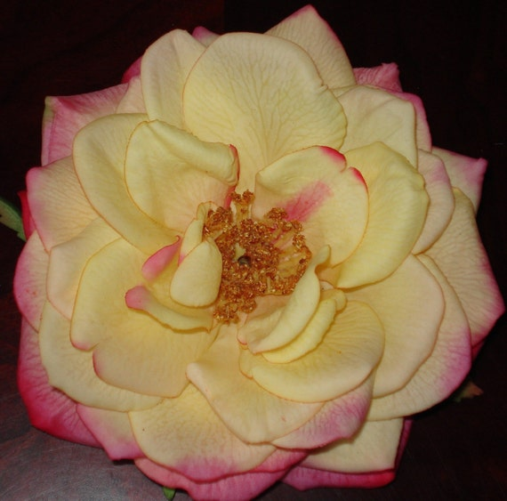 Yellow Rose Hair Clip Fascinator