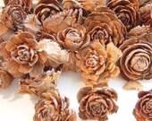 1 Pound Cedar Roses