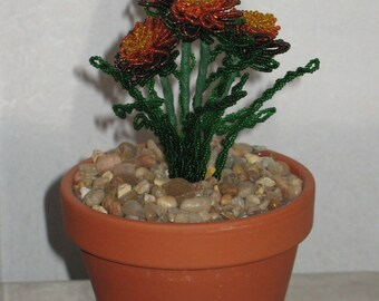 French beaded flowers marigold planted in clay pot