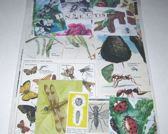 Bugs and Insects Ephemera Pack 65 Pieces of Vintage Ephemera for Altered Art