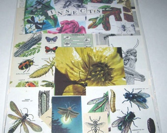 Insect Ephemera Pack of 65 Pieces of Vintage Bugs and Insects for Altered Art