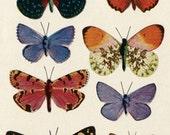 Bright Butterflies Color Illustration from 1937 Biology Science Book