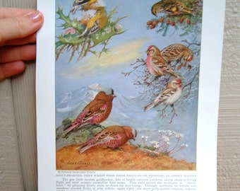 Vintage Bird Print Tanager and Finch Bird Book Plate Art Print from National Geographic Ornithology Art Put a Bird on It Portland Print