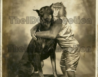 Circus Dog Doberman Pincher  Baboon, vintage photo  Electronic Digital Scan 1890's-1920's Carl Hagenbeck and Great Wallace Shows, 17f..