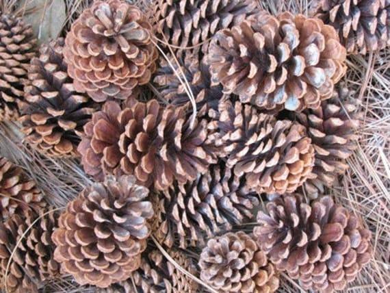 Pine Cones, organic free range Texas grown, 24 Pinecones, Christmas Wreath, Fireplace Starters, Campfire Starters, Home Decor