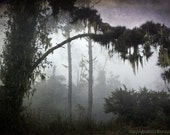 Dark Shadows with spanish moss -  5x7 original photo,  Fog, trees, spooky, autumn, woodland,