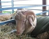 Woolpops Fleece & Fiber Tasting Menu Sampler