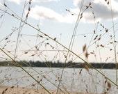 River Grasses - 8 x 8 fine art photograph