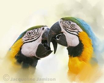 Original Art, ACEO, Parrots