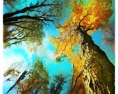 Tree art, Fall, Stepping out, 8x8, art, photography, nature, Fall decor, trees, Fine Art photograph, turquoise decor, naturalist gifts, aqua