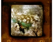 After the thaw, 10x10, 1 of 15, Koi pond, Original signed, Fine Art photograph, Wall art, Home decor, sepia, Koi, fish, leaves, brown