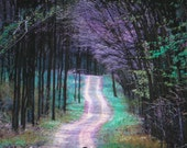 Spring rain, 11x17, Fine art photography, nature wall decor, road less traveled, Home decor, woodlands, trees, spring