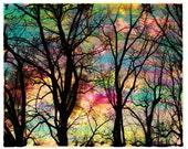 8x10, Cotton candy sunrise, art, photography, nature, Lake house decor, Original, Fine Art photography, wall decor, trees, sunrise